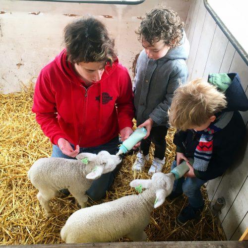 Lammetjes fles geven